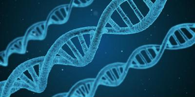 הפעלת צופני DNA